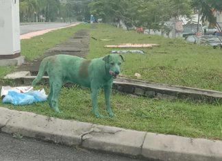 Malesia cane
