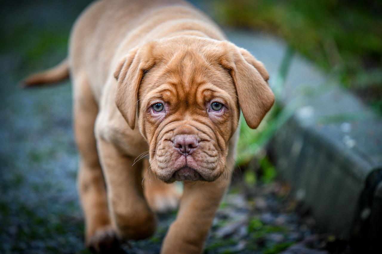 Animali di razza: che cos'è e a cosa serve il pedigree?