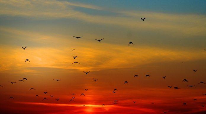 uccelli germania