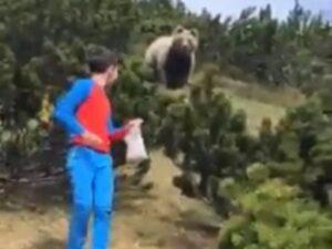 Orso spunta dal cespuglio in Trentino: bambino illeso perché