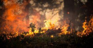 Incendio nella notte distrugge il chiosco sulla spiaggia delle Saline di Olbia