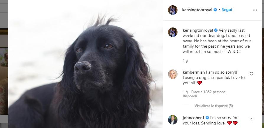 Kate Middleton cane morto