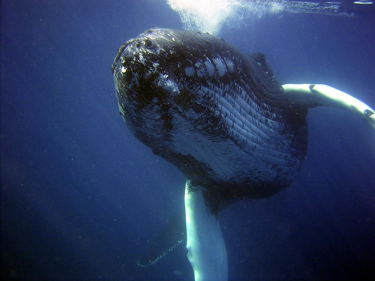balena morta