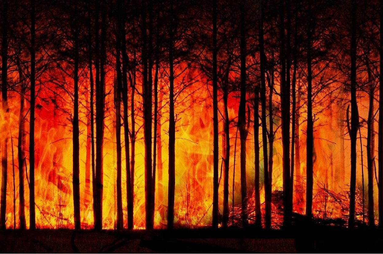 Cane angelo - incendi sardegna